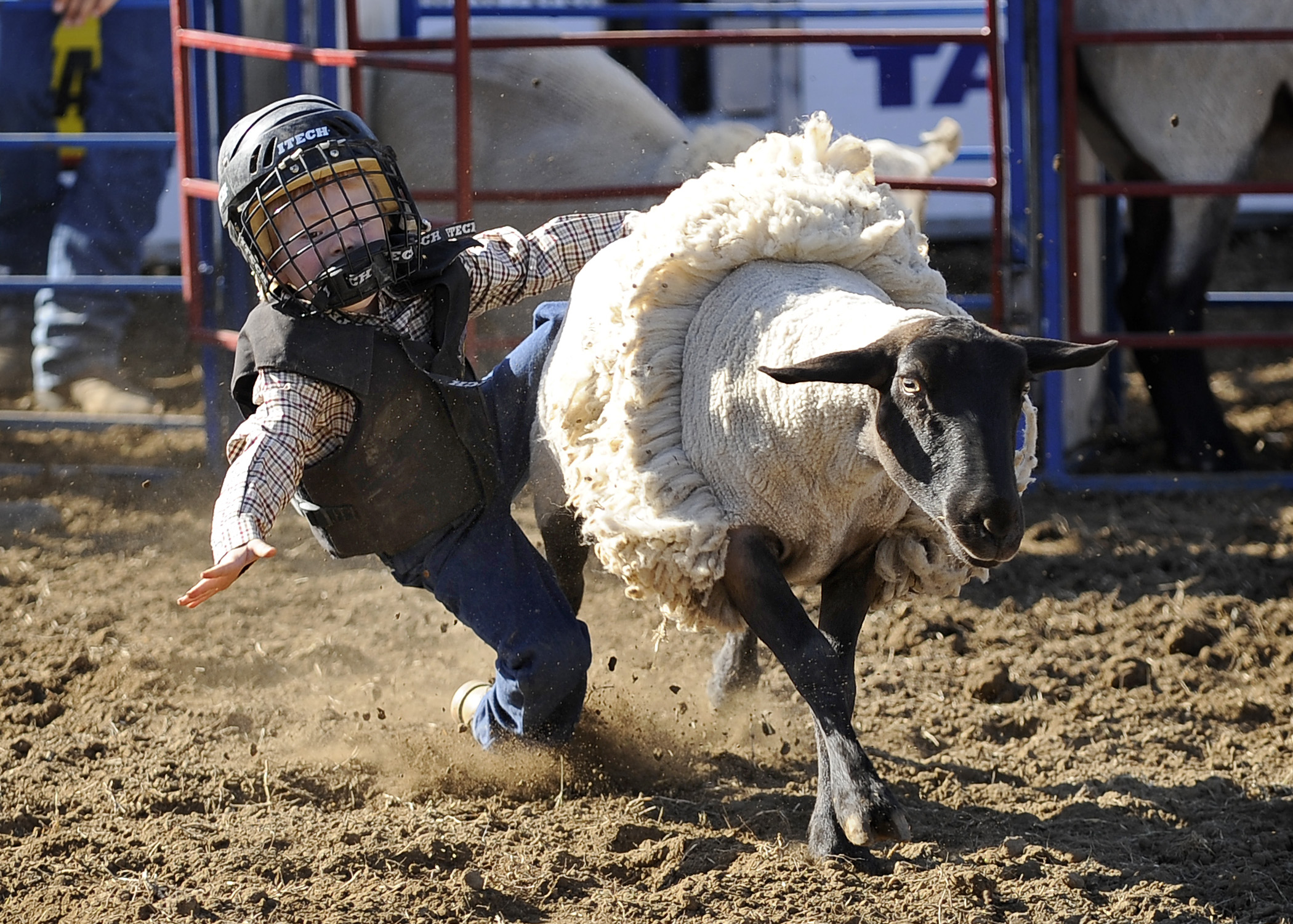 Mutton Bustin Entries