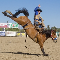 Flying U Rodeo In the News
